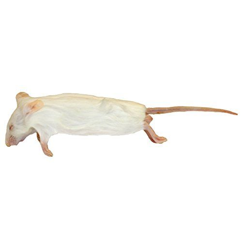 25 Small Frozen Rats Products