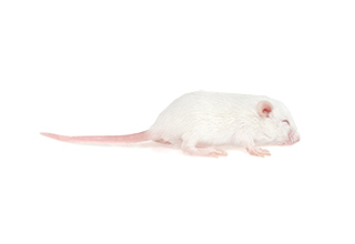 100 Hopper Mice Products